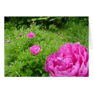 Pink Peony Garden Card