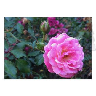 Pink Peony, Greeting Card