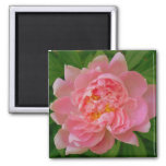 Pink Peony Magnet