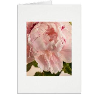 Pink Peony (Paeonia) Card