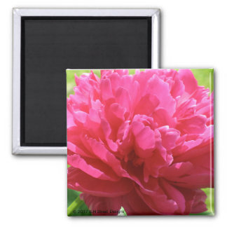 Pink Peony Square Magnet