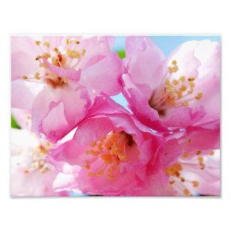 Pink Petal Inspiration Photo Print