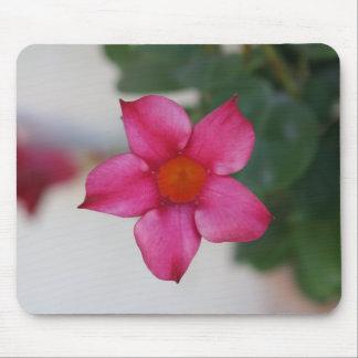Pink Petals in Pisa Mouse Pad