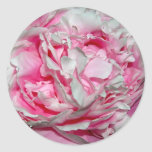Pink Petals Stickers