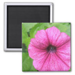 Pink Petunia Flower Square Magnet Magnets