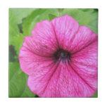 Pink Petunia Flower Tile