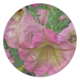 Pink Petunia - photograph Party Plate