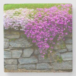 Pink Phlox Stone Coaster