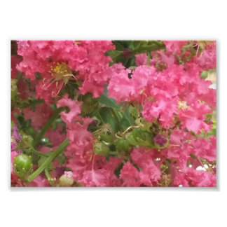 Pink Photo Print