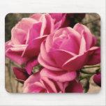 Pink Pirouette Roses