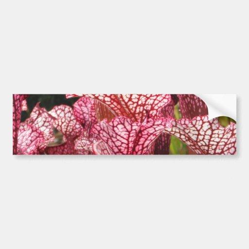 Pink Pitcher Plant Bumper Sticker