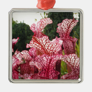 Pink Pitcher Plant Christmas Tree Ornament