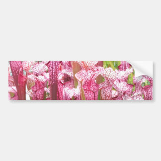 Pink Pitcher Plant Pink flowers Bumper Stickers