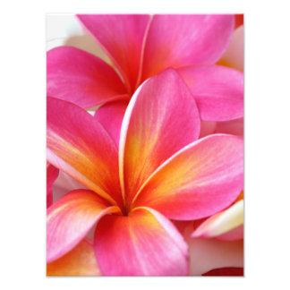Pink Plumeria Frangipani Hawaii Flower Hawaiian Photo