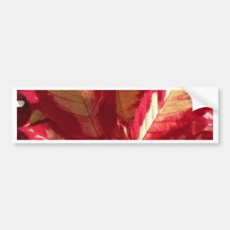 Pink Poinsettia Bumper Sticker