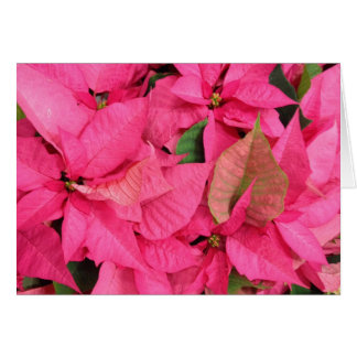 Pink Poinsettia Flower Christmas Greeting Card