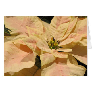 Pink Poinsettia Merry Christmas Holiday Card