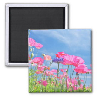 Pink Poppies and Blue Sky 2 Square Magnet