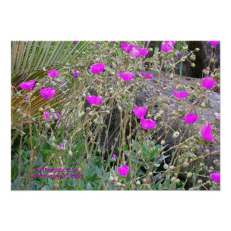 Pink Poppies Print - Select Your Frame