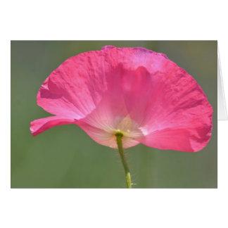 Pink Poppy Flower Greeting Cards