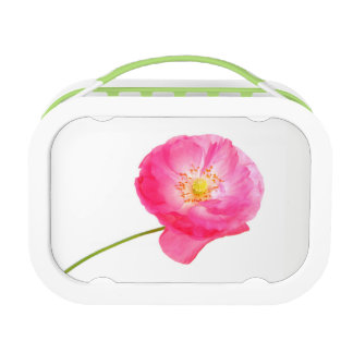 pink poppy lunch box