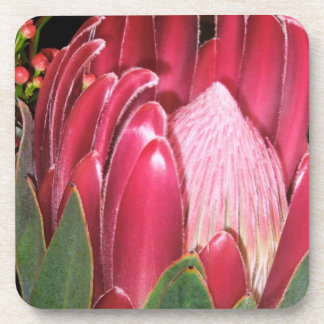 Pink Protea Flower Coaster