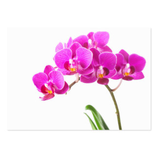 Pink Purple Dendrobium Orchid Tropical Flower Pack Of Chubby Business Cards
