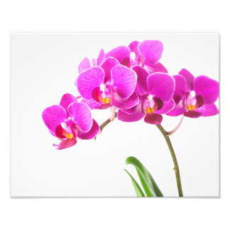 Pink Purple Dendrobium Orchid Tropical Flower Photo Print