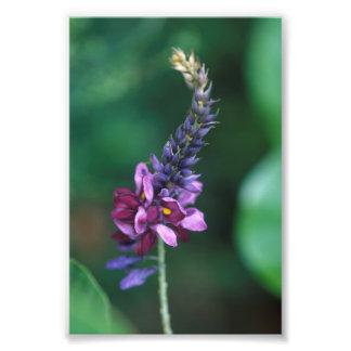 Pink Purple Flower on Flowering Kudzu Photographic Print
