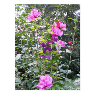 Pink Purple shrub postcard