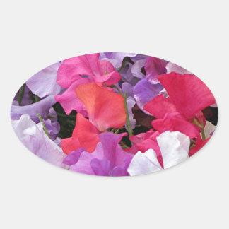 Pink, purple & white Sweet pea flowers in bloom Oval Sticker