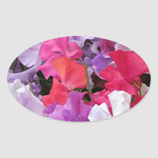 Pink, purple & white Sweet pea flowers in bloom Oval Sticker