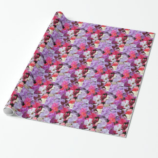Pink, purple & white Sweet pea flowers in bloom Wrapping Paper