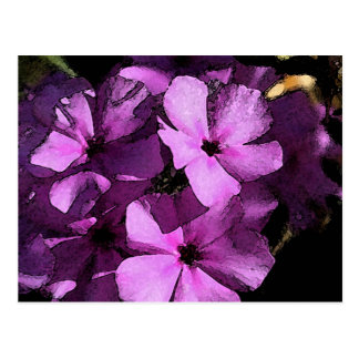 Pink/Purple Wild Phlox Postcard