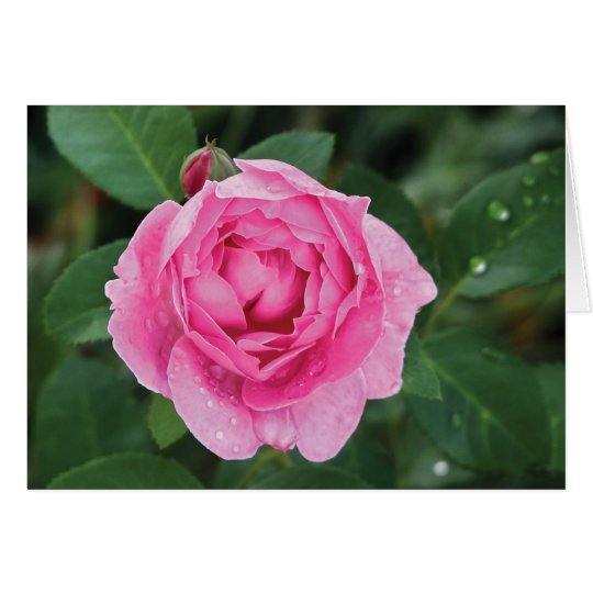 Pink Raindrops Valentine Card