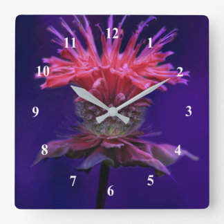 Pink Raspberry Wine Bee Balm Flower on Purple Square Wall Clock