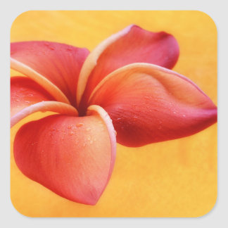Pink Red Plumeria Flower Orange Background Square Sticker