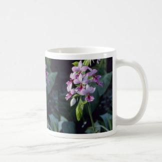 Pink Regnieri (Calanthe Vestita) flowers Classic White Coffee Mug