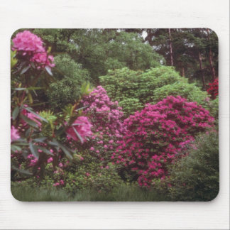 Pink Rhododendroms, Brickhill Woods flowers Mouse Mat