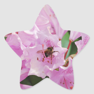 Pink Rhododendron and Bee Star Sticker