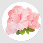 pink rhododendron flowers stickers