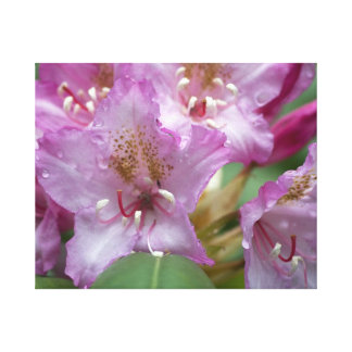 Pink Rhody Wrapped Canvas Stretched Canvas Prints