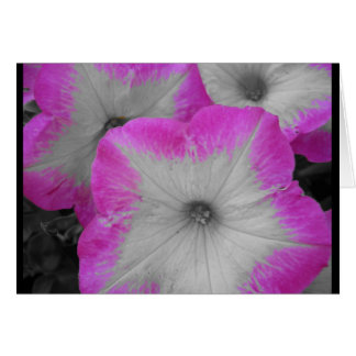 Pink rimmed petunia greeting card