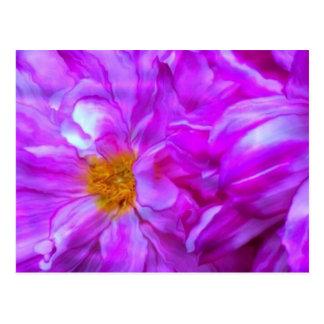 Pink Rippled Dahlia Postcard