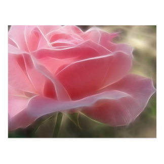 Pink Rose 3 Angelic Post Cards