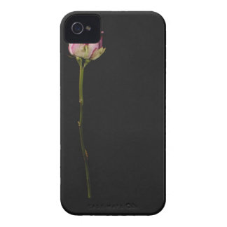 Pink rose 3 iPhone 4 Case-Mate cases