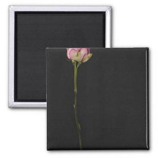 Pink rose 3 magnet