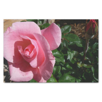 Pink Rose and Bud Tissue Paper