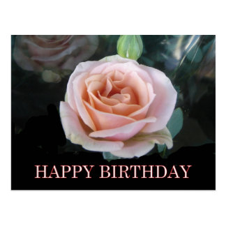 Pink rose birthday greetings postcard
