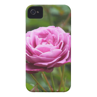 Pink rose  BlackBerry Bold Case-Mate Barely There™